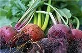 Beets, Detroit Dark Red, Organic, NON-GMO, 25 per package, Unbeatable Taste
