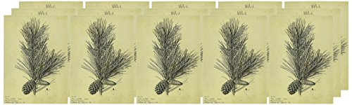 Nouvelles Images Holiday Boxed Note Card Set, Pine Branch (XDB 439)