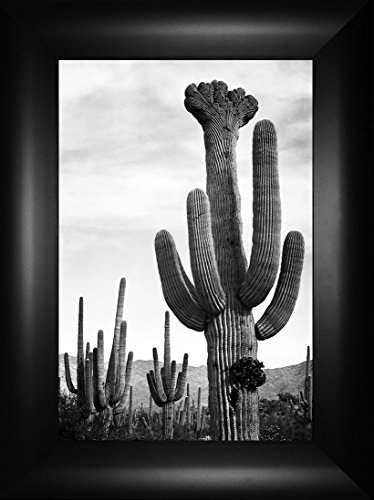 Saguaros By Ansel Adams  Desert Cactus Cacti Grand Canyon