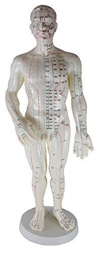人体 模型 男 全身 経穴 模型