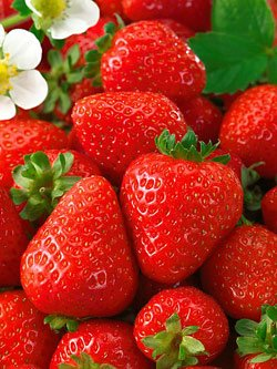 275+ Organic Seascape Strawberry Seeds - DH Seeds - UPC0742137106254 - Plant Markers Included