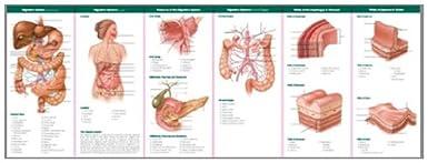 Anatomía y trastornos del sistema digestivo: Guía de estudio (Anatomical Chart Company Ilustrated Pocket Anatomy)