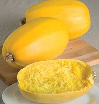 David's Garden Seeds Squash Winter Spaghetti D679 (Yellow) 50 Open Pollinated Seeds