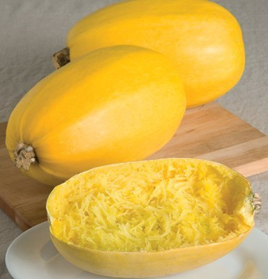 David's Garden Seeds Squash Winter Spaghetti SL981 (Yellow) 25 Heirloom Seeds