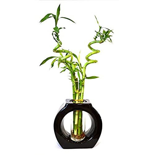 9greenbox lucky bamboo spiral style 8 tall hollow ceramic vase