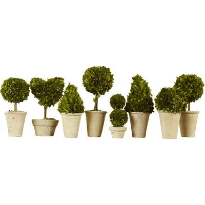 Preserved Boxwood Topiaries, Set of 8, 9.5 to 16-Inch by Traditional Garden