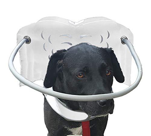 Best blind dog halo 1xl for 2020