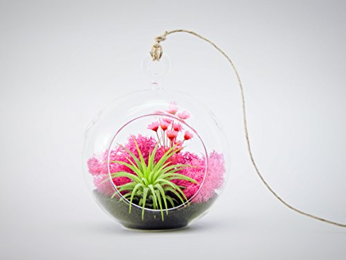 bliss-gardens-air-plant-terrarium-kit-with-4-round-glass-pink-flowers-moss-black-sand-pink-paradise