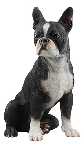 Ebros Large Lifelike Adorable Boston Terrier Dog Statue 16