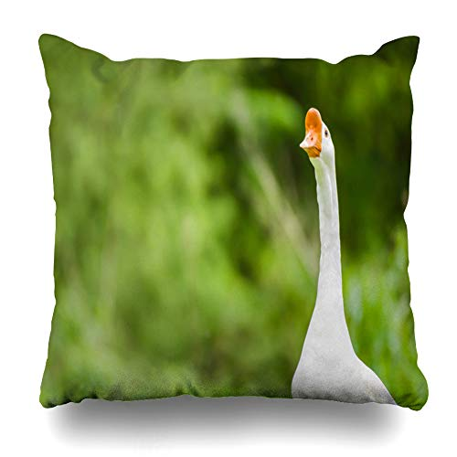 Ahawoso Throw Pillow Cover Pillowcase Square 16x16 White Goose Stunning Space On British Green Waterbird Blurred Large Bird Animals Nature Feather UK Decorative Cushion Case Home Decor Pillowslip (Best Feather Pillows Uk)