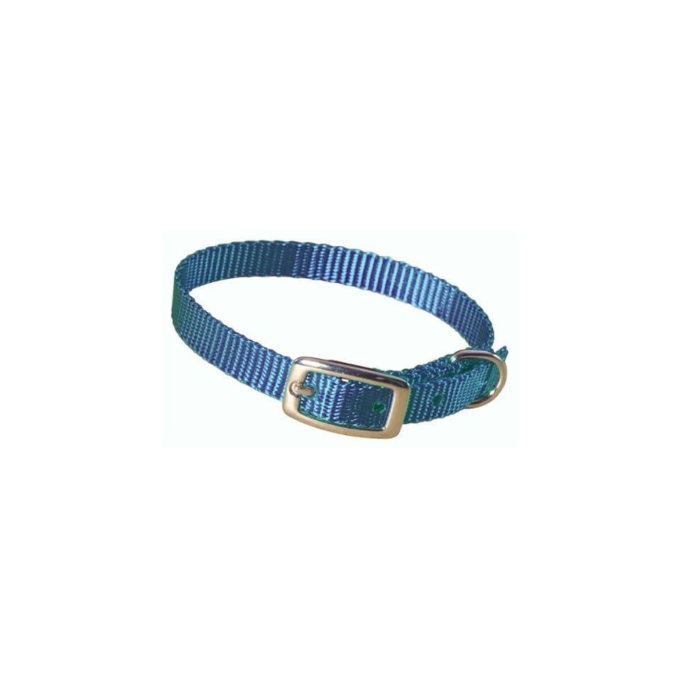 Hamilton 3/8 Single Thick Nylon Deluxe Dog Collar, 14, Teal