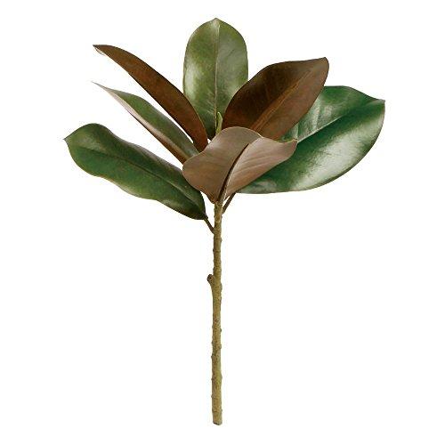 Magnolia Leaves - 7