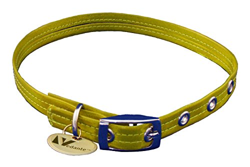 Vedante Super Reflective Dog Collar with Bonus Glow in the Dark Tag (Medium, Gold)