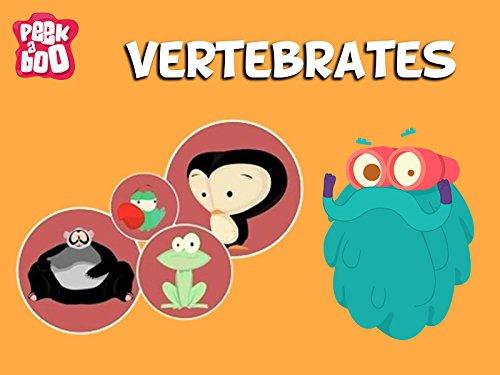 Vertebrates The Dr. Binocs Show Educational Videos For Kids