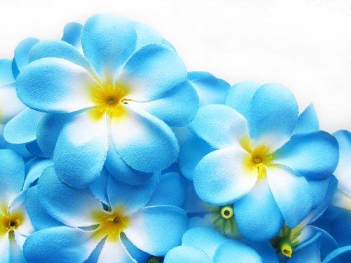 (24) Blue Hawaiian Plumeria Frangipani Silk Flower Heads - 3