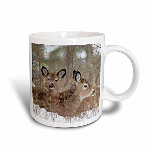 3dRose mug_91722_1 Mule Deer Resting in Cover in Whitefish Montana Us27 Cha1240 Chuck Haney Ceramic Mug, 11-Ounce