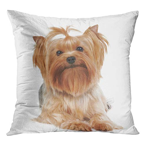 Semtomn Throw Pillow Cover Brown Dog Yorkshire Terrier The Red Groomed Yorkie Show with Hidden Zipper Decorative Home for Sofa 18