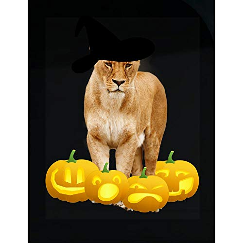 McCaff Merch Halloween Lioness Witch Hat Jackolanterns - Transparent Sticker