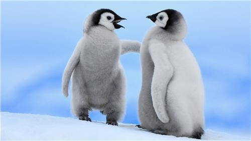 BABY PENGUINS GLOSSY POSTER PICTURE PHOTO cute funny winter love happy (Happy Feet Penguin Pictures)