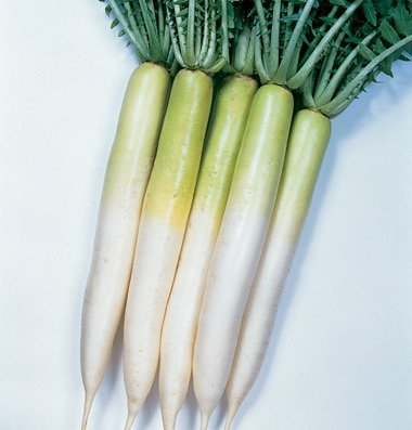 David's Garden Seeds Radish Miyashige D625 (White) 200 Open Pollinated Seeds
