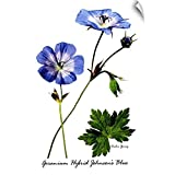 "CANVAS ON DEMAND Archie Young Wall Peel Wall Art Print Entitled Variety of Cranesbill 24""x36"""