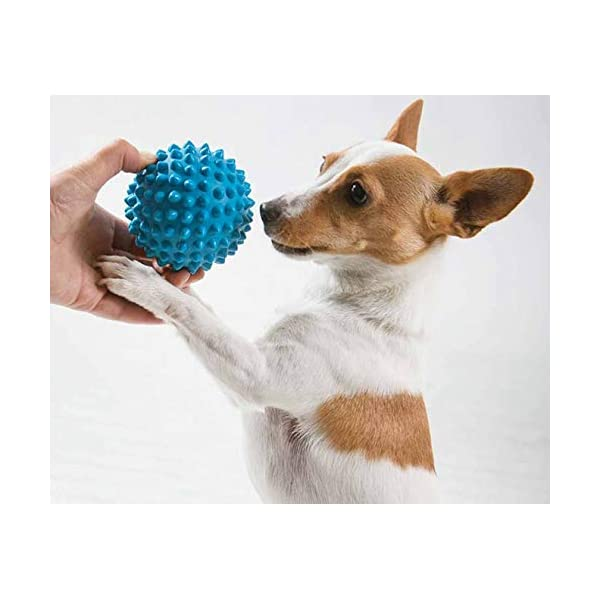 Aussie Dog Soft Catch Ball, Blue, Blue Click on image for further info. 4