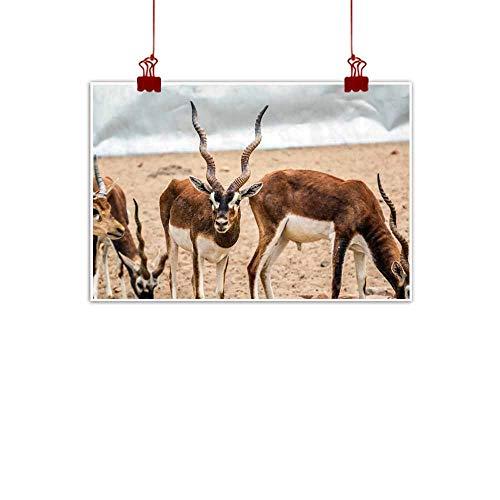 Chinese classical oil painting Beautiful wild animal Blackbuck deer (Antilope cervicapra) or Indian antelope in Lal Suhanra National Park Safari Park Bahawalpur Pakistan Decorations Home Decor 28