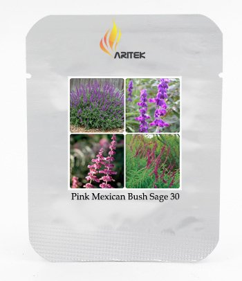 Salvia Leucantha Imported Mexican Bush Sage Pink Flower Seeds, Professional Pack, 30 Seeds / Pack, Bushy ()