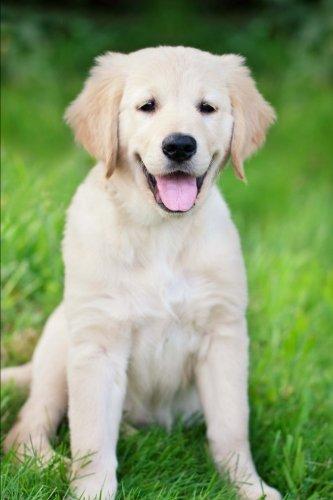Golden Retriever Portrait Dog Journal: 150 Page Lined (Golden Retriever Pups)
