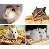 avbxcuecc Acrylic Hamster Cage Small Pet Villa