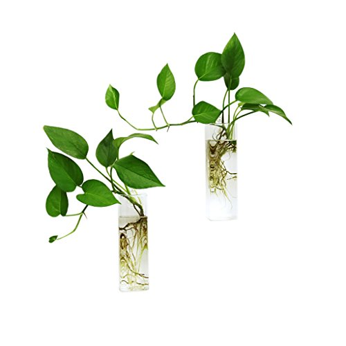 Ivolador 2PCS Wall Hanging Glass Plant Terrarium Container Rectangle Shape Perfect for Home Office Garden Decor Wedding]()
