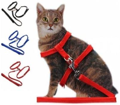 Arnés, collar y correa para gato: Amazon.es: Productos para mascotas