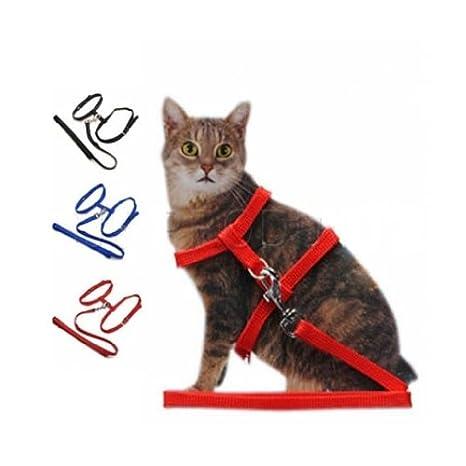 Arnés, collar y correa para gato