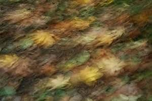 Vitaly Geyman – Fall Impressions I Artistica di Stampa (25,40 x 35,56 cm)
