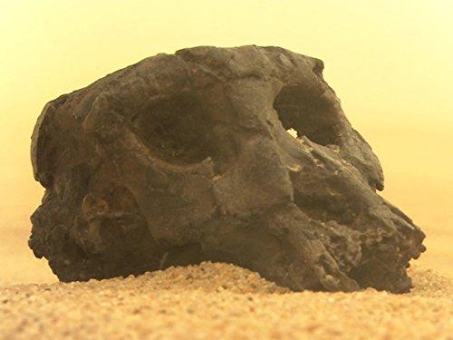 Toumai, the Oldest Human Ancestor