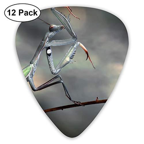 V5DGFJH.B Insects Praying Mantis Classic Guitar Pick Player's Pack for Electric Guitar,Acoustic Guitar,Mandolin,Guitar Bass ()