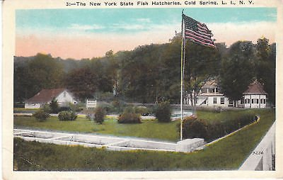 F5050 NY, Cold Spring State Fish Hatcheries Postcard