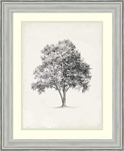 Framed Wall Art Print Vintage Arbor Study I by Ethan Harper 19.00 x 23.12