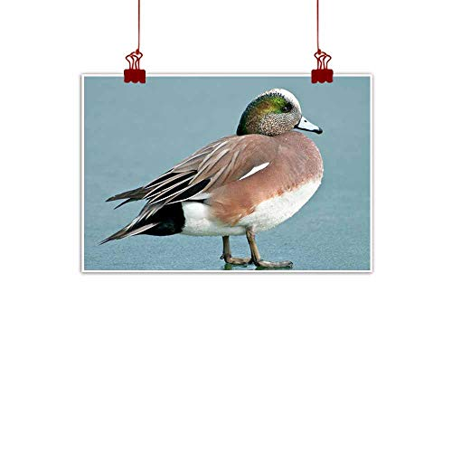duommhome Light Luxury American Oil Painting American Wigeon Canvas Wall Art 24
