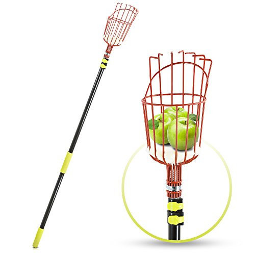 Fruit Picker Tool or Fruit Picking Equipment with Basket – 13ft Long Aluminium Telescoping Pole – Extra Lightweight – Ideal for Picking All Kinds of Fruits – Easy Use for All Ages - Includes Sponge