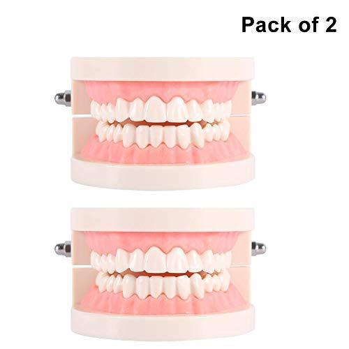 Zerone Modelo de Dientes, 1pc Estudio de Enseñanza Dental de PVC Modelo Estándar de Demostración Enseñe a los Niños...