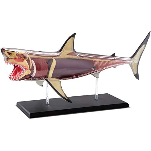 Discovery Mindblown 4D Great White Shark Anatomy Kit, Interactive Marine Biology Model, - Toys X Kids Ray Discovery