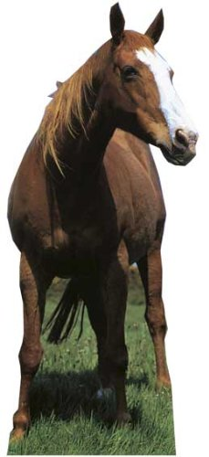 Mustang - Wildlife/Animal Lifesize Cardboard Cutout / Standee / Standup