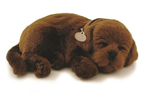PERFECT PETZZZ PET, Chocolate Lab
