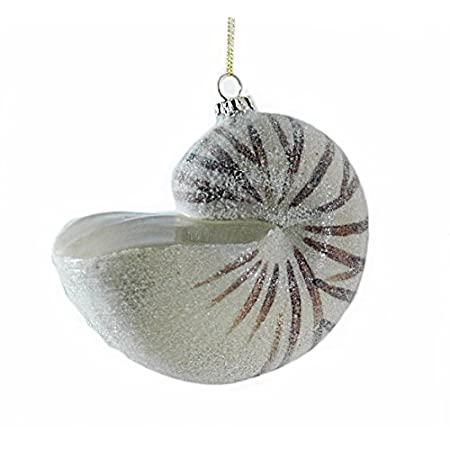 419fSsy8xaL._SS450_ Seashell Christmas Ornaments