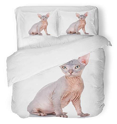 Sphynx Cat Skin Care - 6