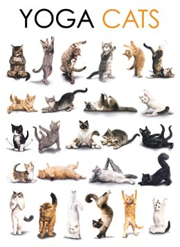 Yoga Cats Katzen Metal Sign Gewölbt New 30x40cm VS3455 ...