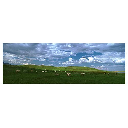 - GREATBIGCANVAS Poster Print Entitled Charolais cattle's grazing in a Field, Rocky Mountains, Montana by 36