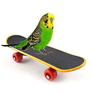 Sage Square Mini Training Skateboard for Parrot, Cockatiel, Lovebird, Budgerigar