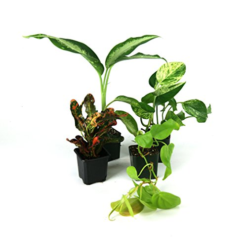 Large Crested Gecko Vivarium Plant Kit by Josh's Frogs (Image #3)